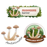 Set of mushroom vector banner, badge, sticker, icon with honey mushrooms Stock Images