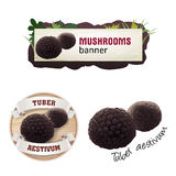 Set of mushroom vector banner, badge, sticker, icon with truffle Stock Image