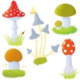 Set of mushrooms Royalty Free Stock Photos