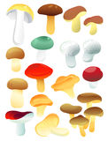 Set of mushrooms. Set of edible mushrooms, vector illustration Royalty Free Stock Photos