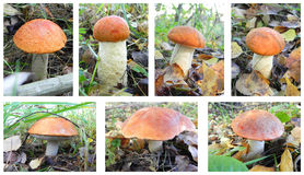Set of mushrooms. Stock Images