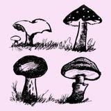 Set of mushrooms, edible and inedible Royalty Free Stock Photo