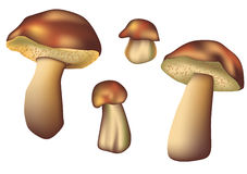 Set of mushrooms Stock Images