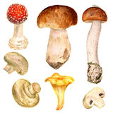 Set of mushrooms Royalty Free Stock Photos