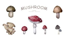 Set of mushrooms on white background Hand drawn watercolor realistic illustration