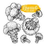 Set nakreślenie brokuły royalty ilustracja