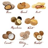 Set of named icons nuts. Walnut, coconut, nutmeg, hazelnut, pecan, almond, peanut, macadamia. Nutrition and agriculture. Set of named vector icons nuts and stock illustration