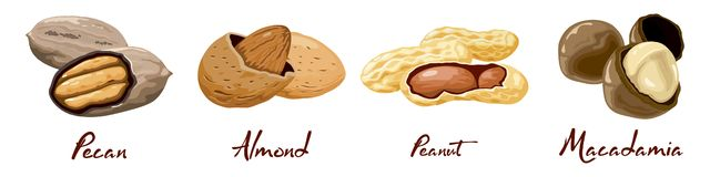 Set of named vector icons nuts and seeds. Nutrition and agriculture concept. Walnut, coconut, nutmeg, hazelnut. Set of named vector icons nuts and seeds. Food stock illustration
