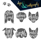 Set names of dog breeds in calligraphy handmade design Stock Photography