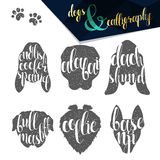 Set names of dog breeds in calligraphy handmade design Royalty Free Stock Images