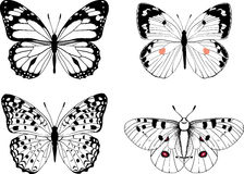 Set of natural black and white vector butterflies Stock Photo