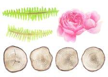 Set naturalni nieociosani elementy odizolowywający na bielu Obrazy Stock