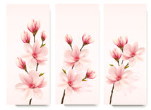 Set of nature flower magnolia banners. Stock Photography
