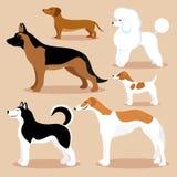 Set nette Hunde vektor abbildung