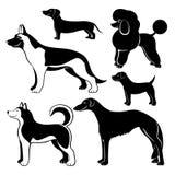 Set nette Hunde stock abbildung