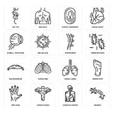 Set of Neuron, Digestive System, Men Hand, Human Lungs, Big Moustache, Spine, Eyeball Structure, Fingerprint, Lips icons. Set Of 16 simple  icons such as Neuron Royalty Free Stock Photo