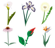 Set of nice flowers Stock Images