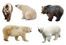 Set niedźwiedzie nad białym tłem Fotografia Royalty Free