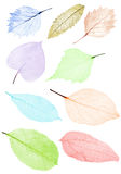 Set of nine color leaf skeletons on white Royalty Free Stock Image