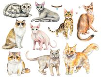 Watercolor set with nine different breeds of cats. Set with nine different breeds of cats isolated on white background. Watercolor pencils hand drawn stock illustration