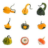 Set of nine diverse colorful pumpkins isolated over  white Stock Image