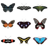 Set of nine exotic butterflies Royalty Free Stock Photos