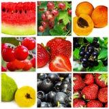 Set of nine fruit Stock Photography