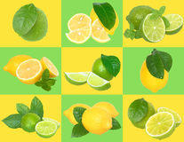 Set of nine lime and lemon on a checkered background. Stock Images