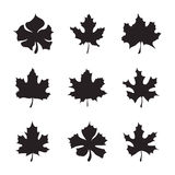 Set of nine Maple-leaf silhouette vector Stock Photos