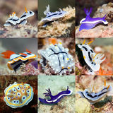 Set of nudibranches royalty free stock photos