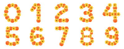 Set of number created by daisy flowers. Royalty Free Stock Photos