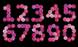 Set of numbers from the bright colors of asters Stock Images
