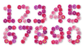 Set of numbers from the bright colors of asters Royalty Free Stock Images