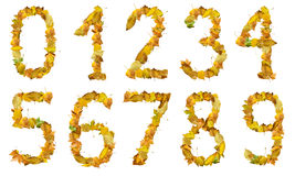 Set of numbers made of autumn leaves Royalty Free Stock Image
