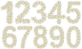 Set of numbers made of flowers isolated Royalty Free Stock Image