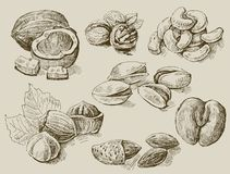 Set of nuts Stock Photography