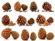 Set of Nuts and Cones of Siberian Pine Isolated Stock Photo