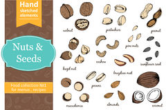 Set of nuts and seeds drawings. Sketches. Hand-drawing. Royalty Free Stock Photo