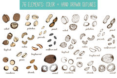 Set of nuts and seeds drawings. Sketches. Hand-drawing. Stock Image