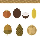 Set of nuts. Vector elements for design Royalty Free Stock Photography