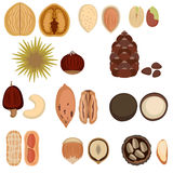 Set of nuts. Royalty Free Stock Photo