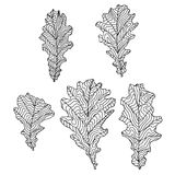 A set of oak leaves Royalty Free Stock Photo