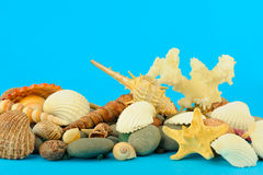 Set of objects of the sea underwater world Royalty Free Stock Photo