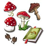 The set of objects on the subject of picking mushrooms isolated on a white background. Amanita poisonous mushroom.  Stock Photography