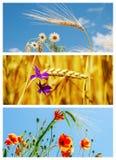 Set obrazki z kwiatami i uprawami obrazy royalty free