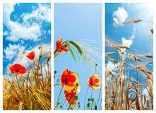 Set obrazki z uprawami i kwiatami obraz stock