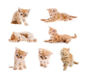 Set odizolowywający czerwony kot Fotografia Royalty Free