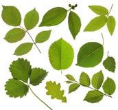 Set odizolowywający zielony liść Zdjęcia Royalty Free