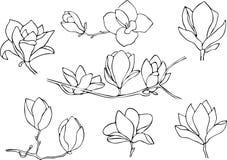 Set odizolowywaj?cy na bia?ym tle magnolia R?ka rysuj?ca wektorowa ilustracja, nakre?lenie ilustracja wektor