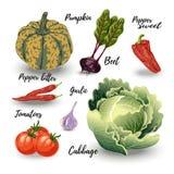 Set odosobneni warzywa Obraz Stock